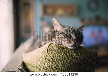 Tabby Cat  Sleeping On The Top Of A Couch