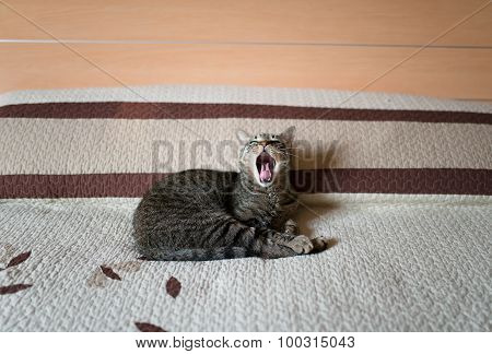 Tabby Cat Yawning On A Bed