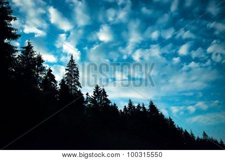 Black Forest With Trees Over Blue Night Sky