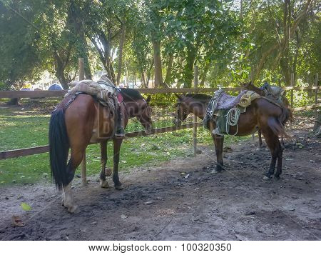 Horses At Tayrona National Park