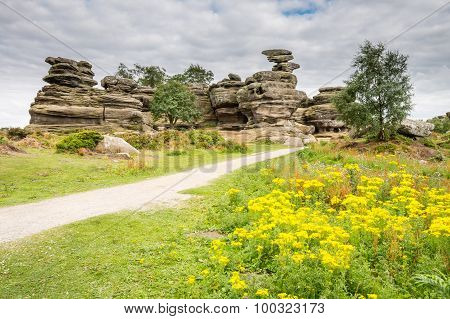 Wildflowers At Brimham Rocks