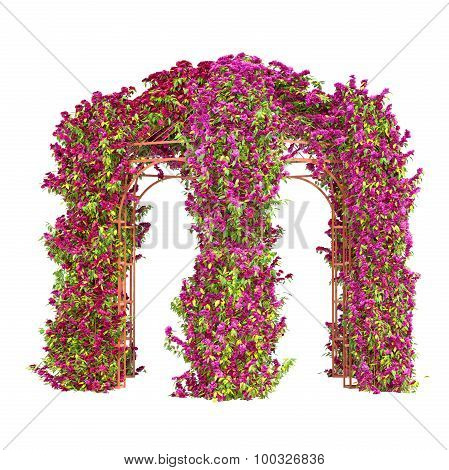 Arbour with pink flowers
