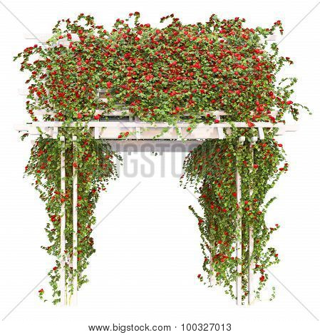 Bushes of red roses pergola