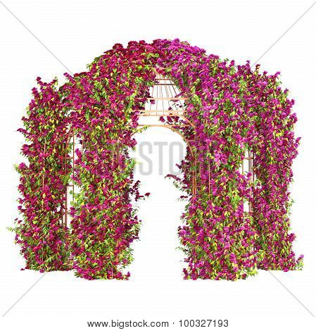Curly flowering plant pergola