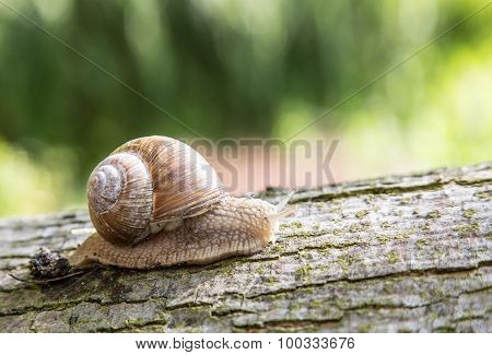 Snail creeping up the tree. Macro shoot.