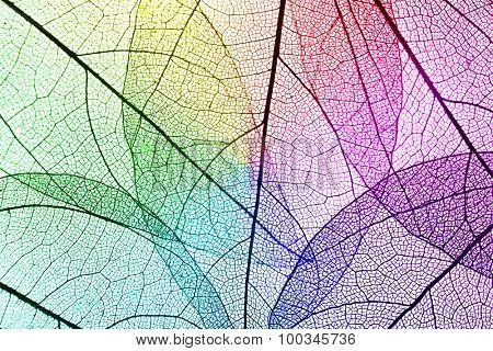 Multicolor decorative skeleton leaves background
