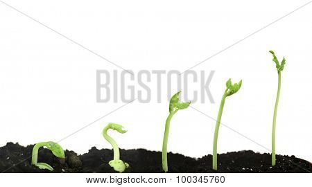 Bean seed germination different stages isolated on white