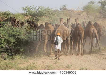 Indian Men Attended The Annual Pushkar Camel Mela
