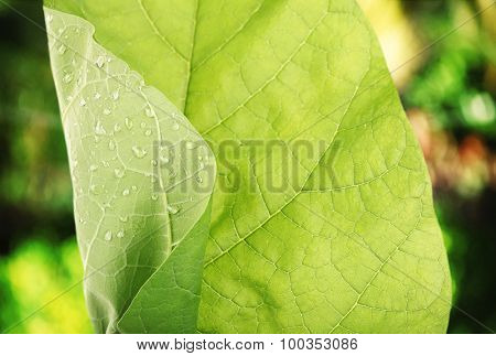 Fresh green leaf with drops close-up