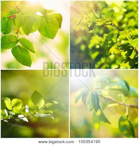 Collage with green leaves on tree