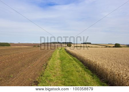 Grassy Farm Track With Wheat Field