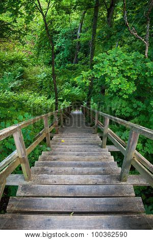Wooden Stairway To Mountains Forest, Trail In Reserve