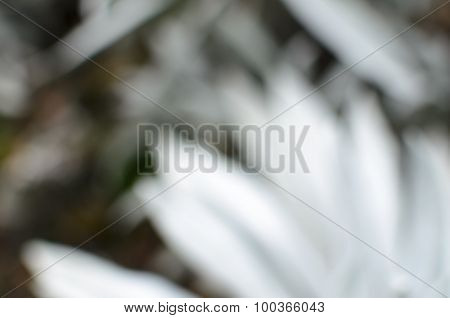 Tender Blurred Natural Background In Pastel Colors