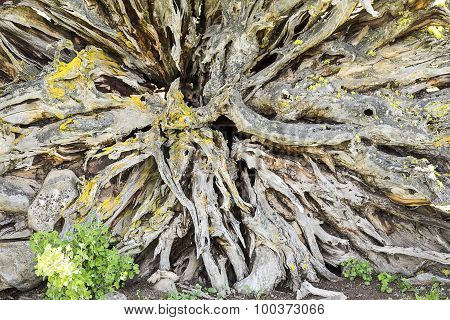 Tree Root Ball Abstract
