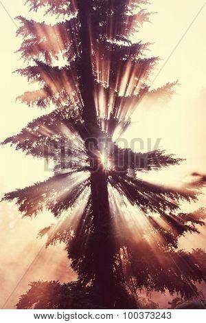 Sunbeams in morning summer forest.. Instagram filter.