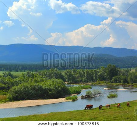 summer landscape with river between mountains and grazing horses - South Ural