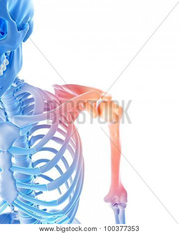 medical 3d illustration of a painful shoulder