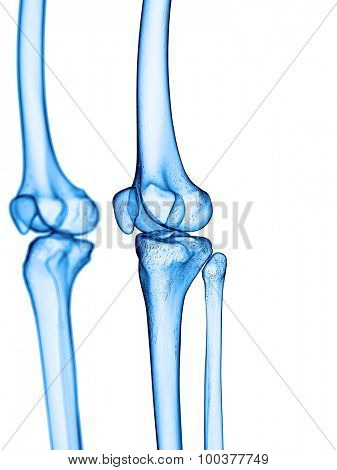 accurate medical illustration of the knee
