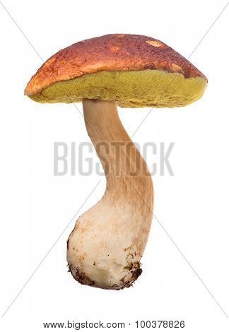 large cep mushroom isolated on white background