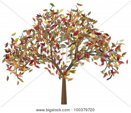 Tree With Autumn Leafage