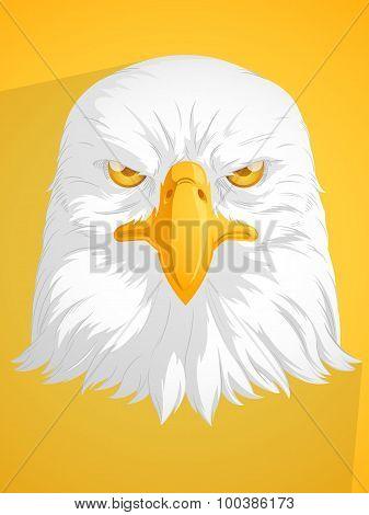 Bald Eagle Vector