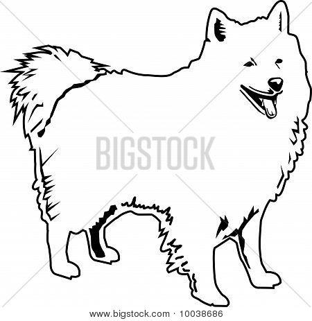 American Eskimo schwarz und weiß