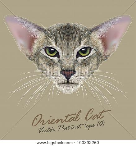 Vector Portrait of Oriental Cat
