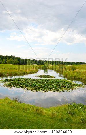lotus pond. Beautiful landscape