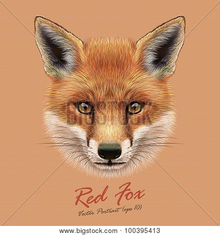 Vector Illustrative Portrait of a Red Fox