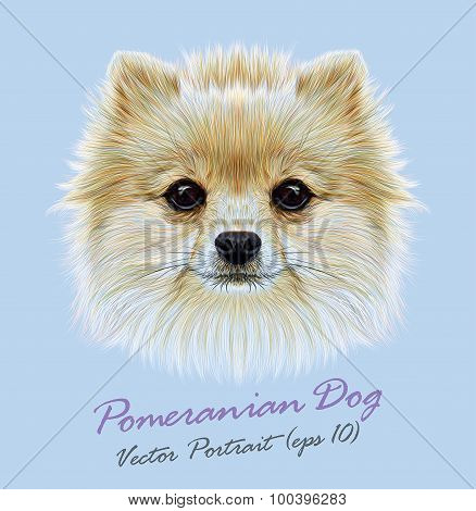 Vector Illustrative Portrait of Pom Pom