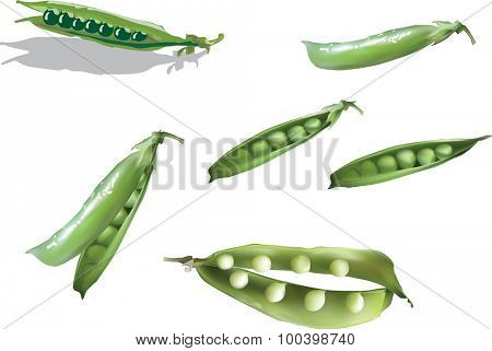 illustration with set of green pea isolated on white background