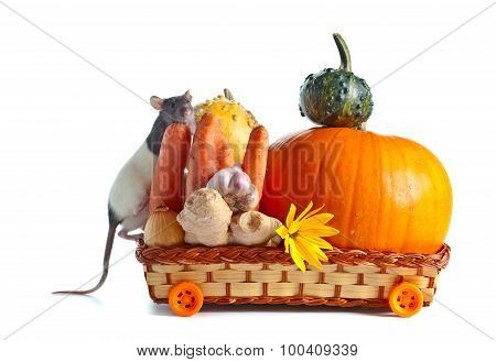 Rat And Vegetables