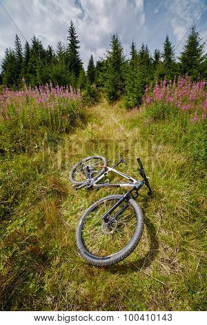 Mountain Bike Resting In A Field Near Forest