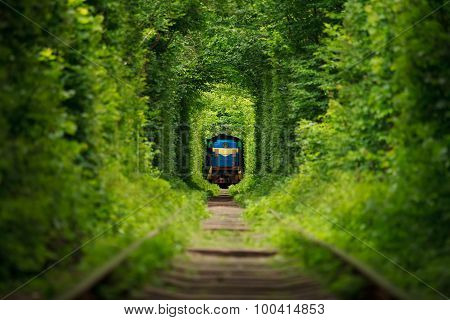 secret train 'tunnel of love' in summer
