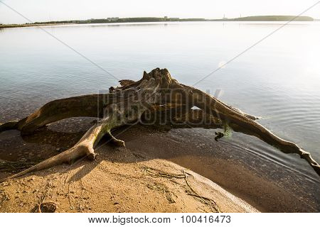 snag on the shore of a small lake