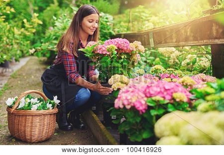 Young Woman At A Nursery Holding A Hydrangea