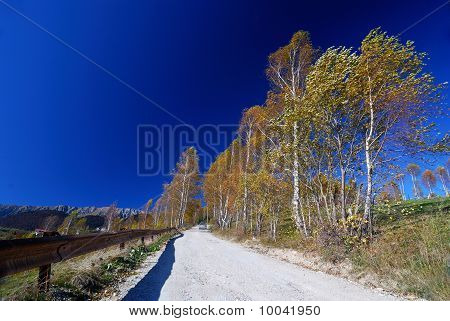 Country Road Landscape In Autumn