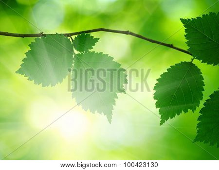Sun beams and green leaves