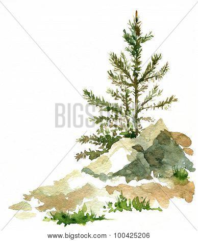 pine trees and rocks