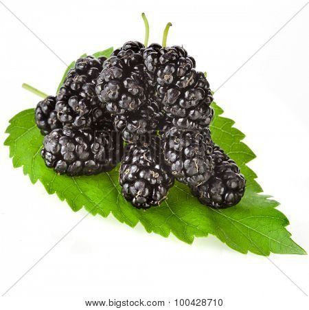 Mulberries in the leaf Isolated on white background