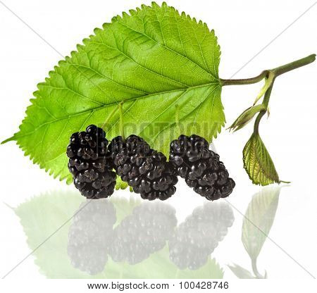 Mulberries with leaves Isolated on white background