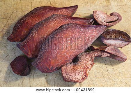 Fistulina Hepatica Fungus