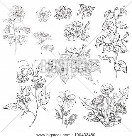 Flowers, set, outline