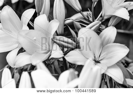 B&w Tropical Flower Closeup