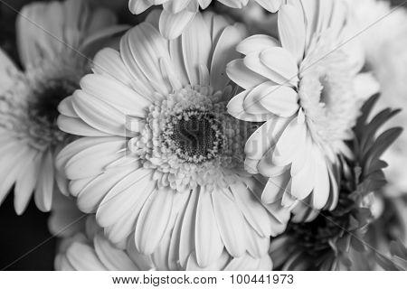 Monochrome Bouquet Of Dahlia Flowers