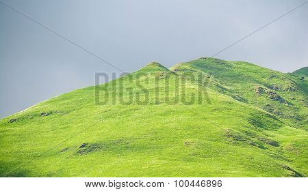 Green grass on a hill and grey sky in the background