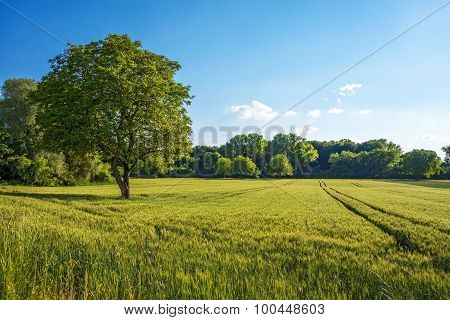 Tree, Field, Meadow - Rural Nature Landscape