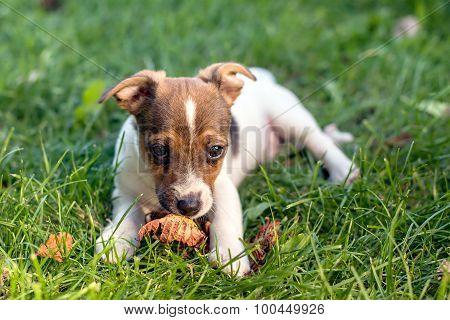 Adoring Puppy Eyes