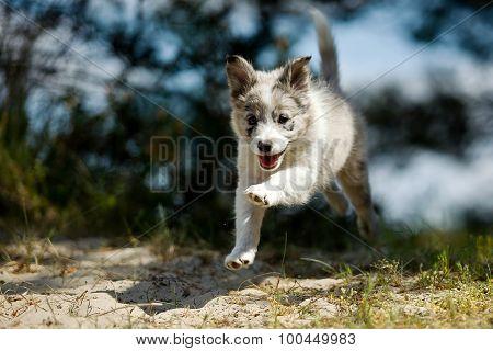 Happy Running Puppy Dog