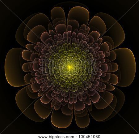 Primitive Fractal Flower Illustration Over Black Background